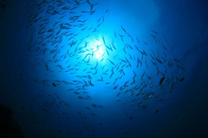 Thai Union releases progress report on commitment to 100% sustainable tuna